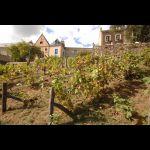 Vignes Cité Plantagenêt © Ville du Mans Gilles Moussé