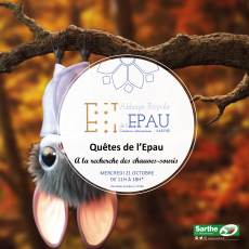Visuel LES QUÊTES DE L'EPAU : A LA RECHERCHE DES CHAUVES-SOURIS
