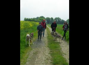 ASSOCIATION DES CROCS BLANCS SARTHOIS - CANI-RANDO
